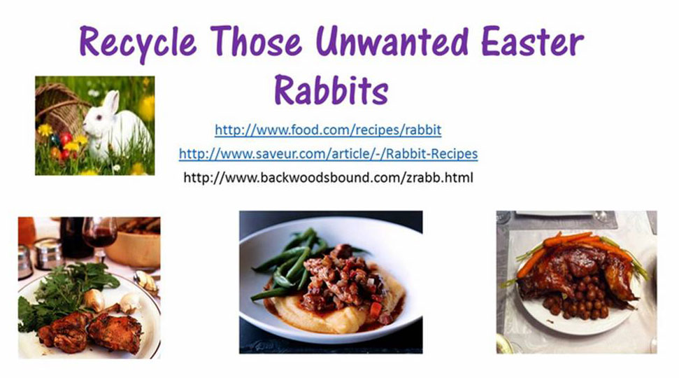 unwanted-rabbits