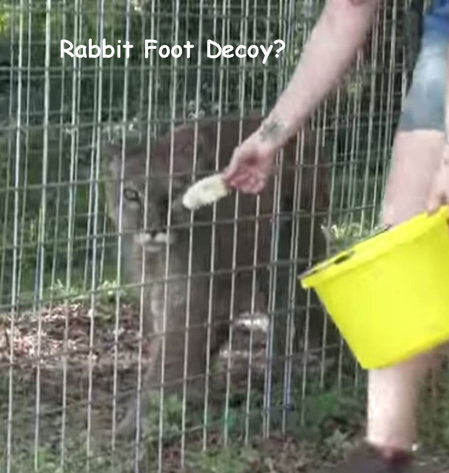 rabbit-foot-decoy